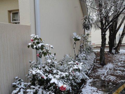 03_snow